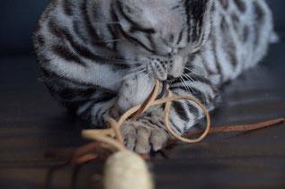 080 - Leder Katzenangel