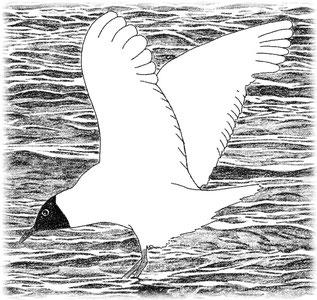 чайка - a mew-gull, издательство ЛИСТОС