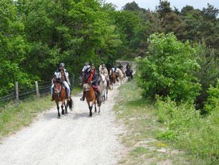 Les cavaliers sur le plateau de la Matheysine
