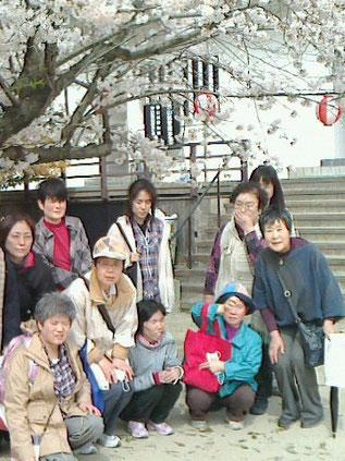 桜の花がとても綺麗です。