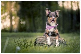 Hund sitze im Wald und wartet auf den  Hundesitter