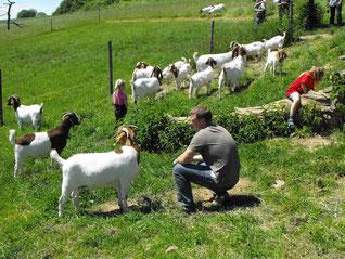 4. Europäisches Buren- und Ziegenzüchtertreffen am 23. und 24. Mai 2009 im Saarland