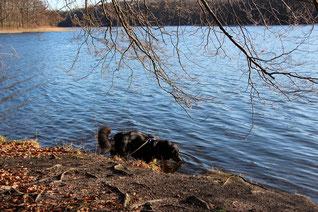 Leon im Wasser des Liepnitzsees