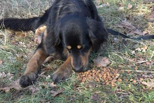 Trockenfutter für den gesundheitsbewussten Hund