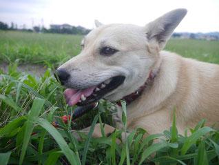 草むらに座っていたら…隣にきたね!
