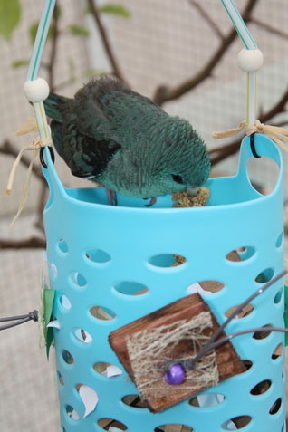Jouet foraging pour perroquet