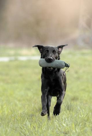 Foto: Vierpfotenliebe - Hundephotografie mit Herz