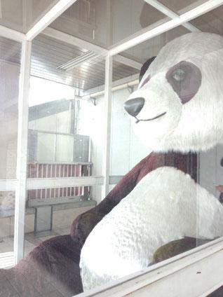 ジャイアントパンダですのでなるべく大きめに・・・。