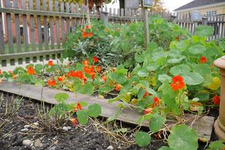 Garten im Stiegl Gut