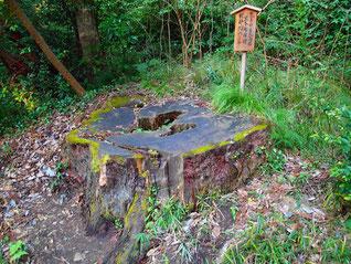震災で倒壊の鳥居は樹齢600年の杉で再建。