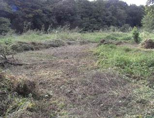 ②番湿地改善予定地