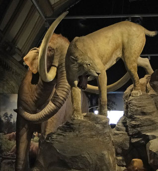 Mammut + Raubkatze
