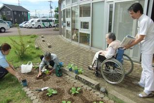 みんなで白菜の苗を植えています