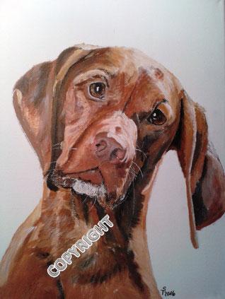 Kopfporträt von einem Magyar Vizsla. Der Hund schaut den Betrachter mit leicht nach rechts geneigtem Kopf an. Fell rotbraun. Augen und Nase des Hundes braun, Tiermalerei, gemalte Tierportraits nach Fotovorlage, Tiere zeichnen lassen