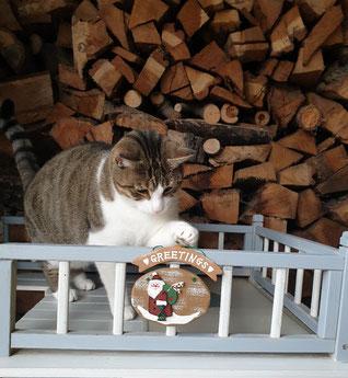 Katze Kasi und ihr Weihnachtswunsch