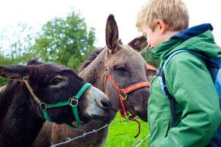 ferme pédagogique pour découvrir les ânes