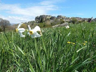 Saignon, les Bories, le Rocher des Druides  Lundi 6 avril 2015