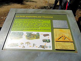 La forêt des Cèdres ; 20 mai 2018