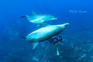 御蔵島ドルフィンスイムツアー:イルカと人