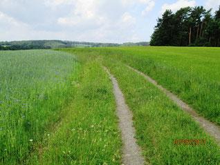 WT Bindlach: links Öko-Landwirtschaft, rechts steril