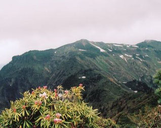 シャクナゲと武尊岳