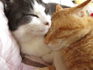なんてかわいい猫ネコねこ画像