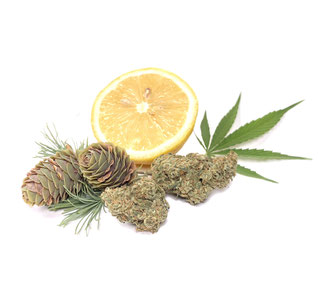 Cbd Shop- CBD Cannabisblüten kaufen