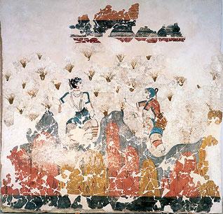 safran épice récolte antiquité