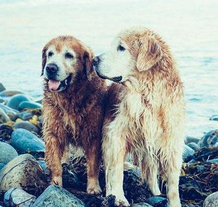 Zwei Hunde am Seeufer