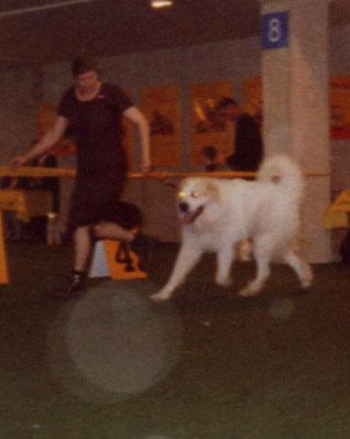 Welthundeausstellung 2003 in Dortmund