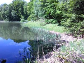 Der Baa-See, Foto: Gisela Specht (privat)