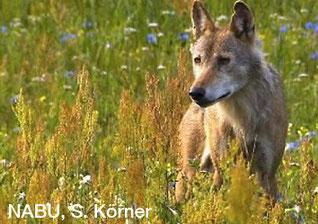 Foto: NABU. S. Körner