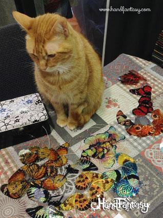 gato con mariposas