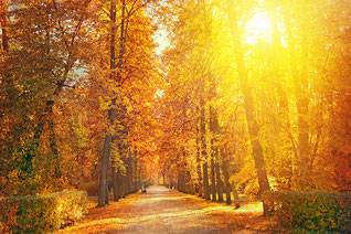 Wir sagen dem Sommer Lebewohl - am 22. September 2017 ist kalendarischer Herbstbeginn (Foto: wetteronline)