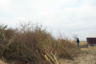 Biikebrennen auf Hooge. Ein alter nordfriesischer Brauch.