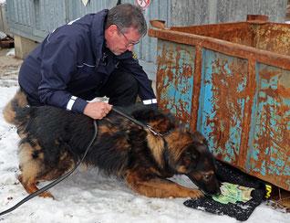 Foto: Polizeipräsidium Einsatz Banknotenspürhund Django zeigt seinen Fund an.