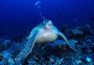 8 de junio: Día Mundial de los Océanos © WWF