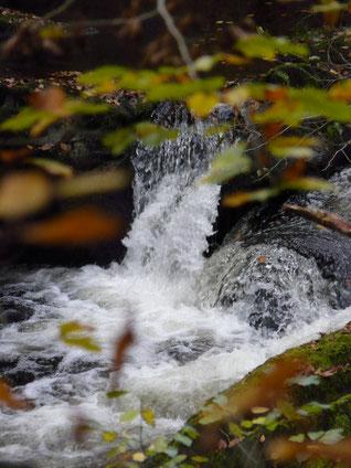impact débit truite rivière