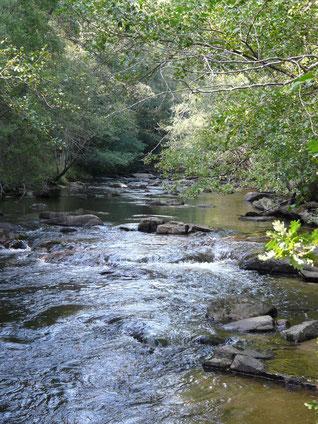 Une végétation de berge abondante, des blocs, des racines, des radiers, des courants, la Corrèze présente l'habitat nécessaire à la bonne santé des populations de poissons