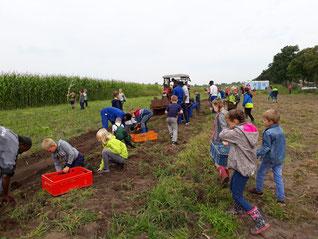 Wiegboldsburer Grundschüler und freiwillige Helfer bei der Kartoffelernte auf dem Kulturacker. Foto: C. Laudemann