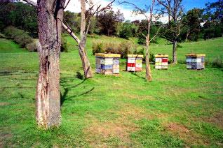 frei aufgestellte Bienenkästen