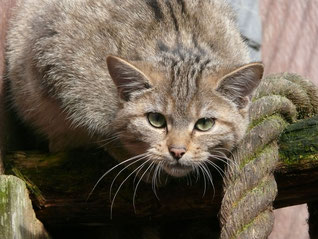 Bildquelle: NABU-Artenschutzzentrum Leiferde