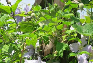 Baumschnitt, Baumpflege, Gartengestaltung, Pflanzung