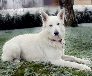 Xara Sunny of white Valley