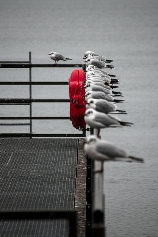 stralsund möwen farbtupfer hafen steg winter fotografieren lernen wiederholung mecklenburg vorpommern trübe tage