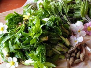 春の山菜料理筍料理専門店