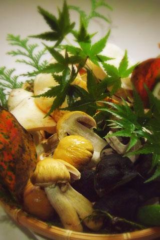 松茸料理国産松茸天然きのこ料理店きのこ料理専門店地物松茸木曽の極上松茸本当に美味しい松茸を食べよう!きのこランチ秋を満喫しょう恵那中津川天然きのこ雑きのこうむそうだけぼうずぼこうたけかわたけろうじしろまいたけさるまいほんしめじそなしばもちねずみあし紫しめじきしめじコウムソウダケボウズボコウタケカワタケロウジシロマイタケサルマイホンシメジソナシバモチネズミアシ