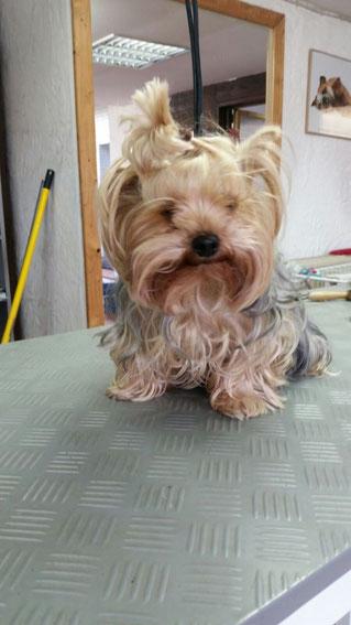 Dogs Cut Hundesalon Delmenhorst unser Kunde Luna vorher