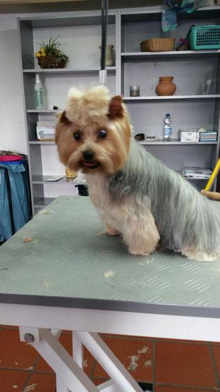 Dogs Cut Hundesalon Delmenhorst unser Kunde Luna nachher