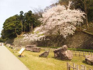金沢城の石垣もきれい